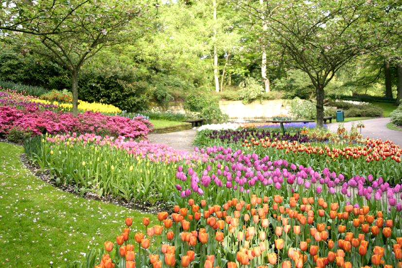 Frylink Supplier Of Flower Bulbs And Perennials