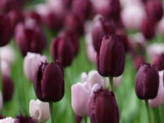 World's best bulbs and plants